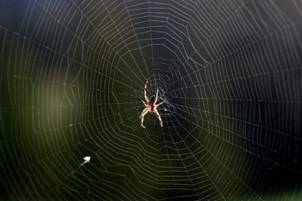 spider-st-cergue